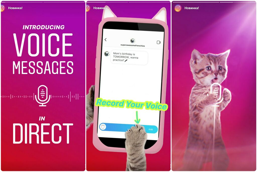 От лица Instagram о новинке сообщил премилый котик